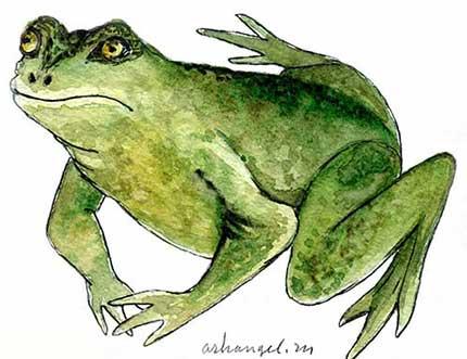 Как относились к жабам в разных культурах? | Музей Лягушек ...