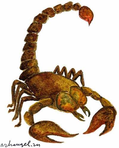 к чему сняться скорпионы начальном
